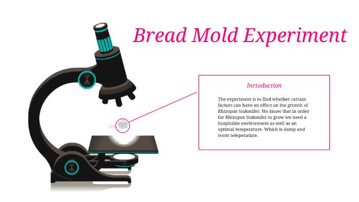 bread mold experiment report