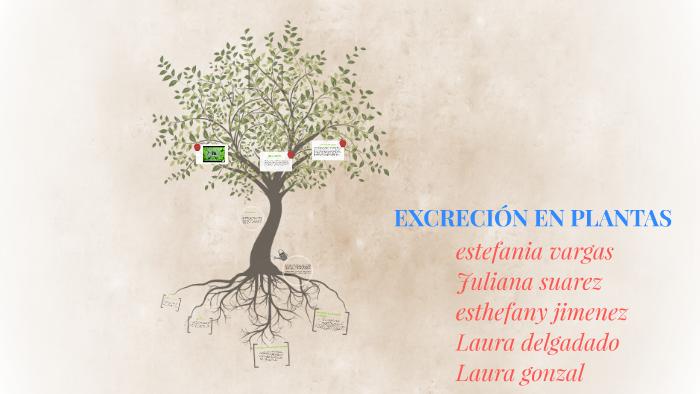 EXCRECIÓN EN PLANTAS by maria cadena on Prezi