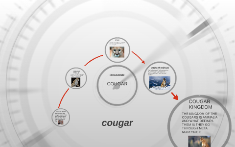 TAMI: What defines a cougar