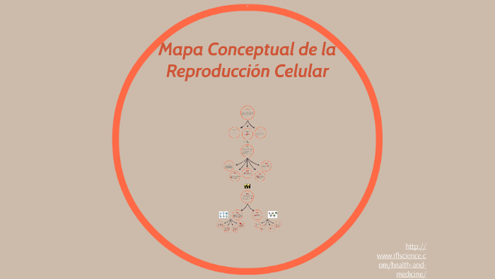 Mapa Conceptual De La Reproduction Celular By Rosa Paz On Prezi
