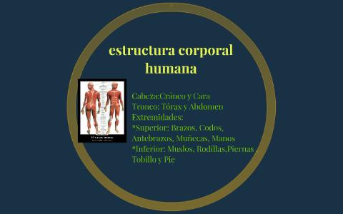 Estructura Corporal Del Cuerpo Humano By Luis Piña On Prezi