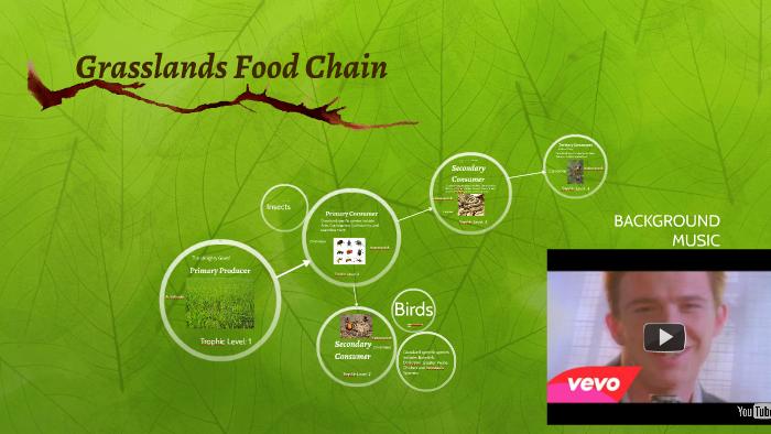 Grasslands Food Chain By Will Bird On Prezi
