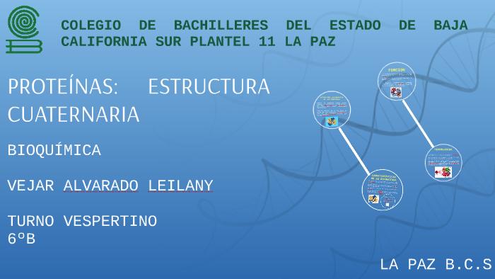 Estructura Cuaternaria De Las Proteínas By Leilany Azaret