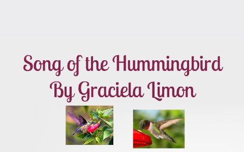song of the hummingbird themes