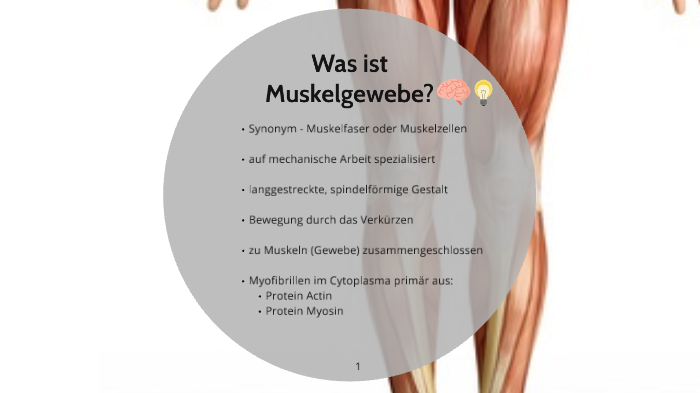 biologie- Muskelgewebe by Laura Thoms on Prezi Next