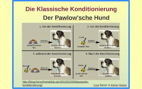 konditionierung hund