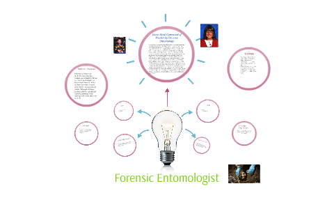 Forensic Entomologist By Katelyn Long