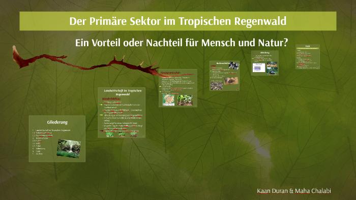 Der Primare Sektor Im Tropischen Regenwald By Maha Chalabi