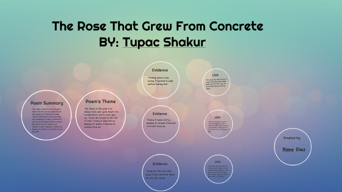 theme of the rose that grew from concrete