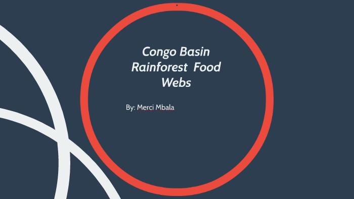 congo rainforest food chain