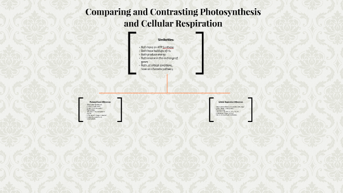 Comparing And Contrasting Photosynthesis And Cellular