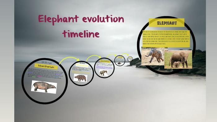 Elephant evolution timeline by Kayel z on Prezi