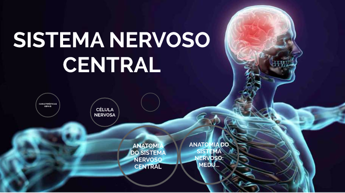 Sistema Nervoso Central Anatomia By Naiara Luísa Hammes On