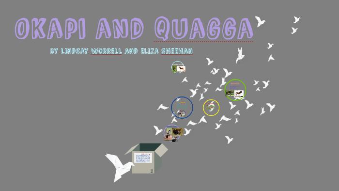 Okapi And Quagga By Lindsay Worrell On Prezi