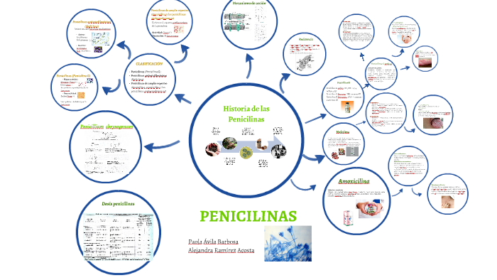 Amoxicilina dosis in english