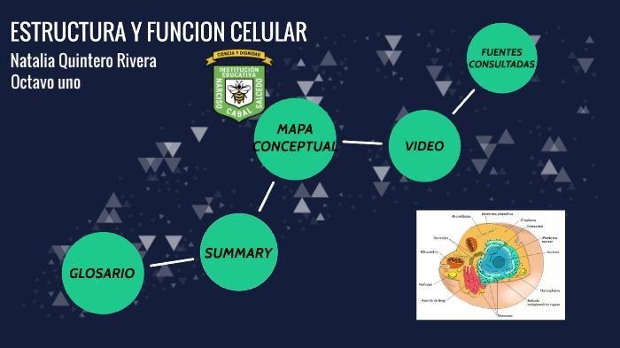 Estructura Y Función Celular By Natalia Quintero Rivera On