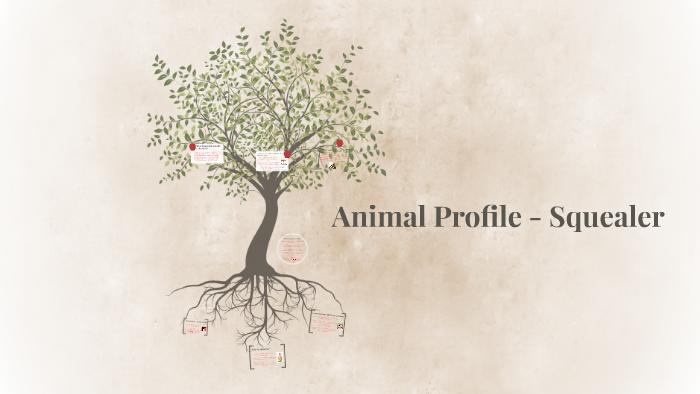 Animal Profile - Squealer by Harrison Popple on Prezi