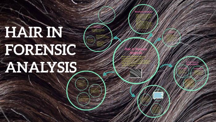 Hair In Forensic Analysis By Anna Schmitz