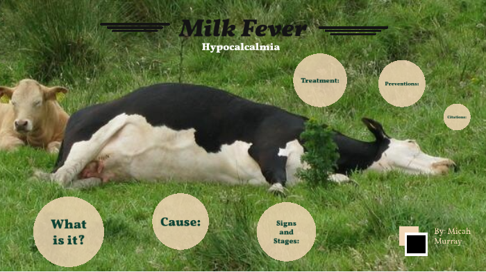Milk Fever By Kaley Boudreau
