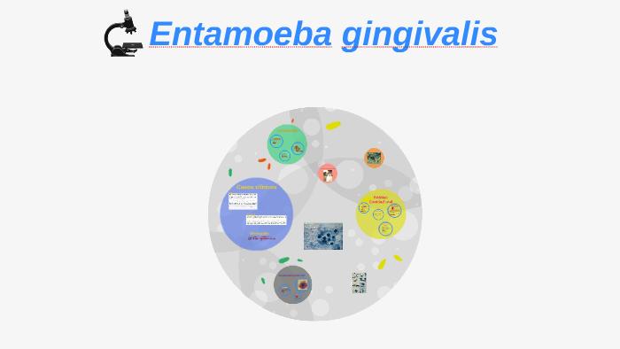 entamoeba gingivalis taxonomia