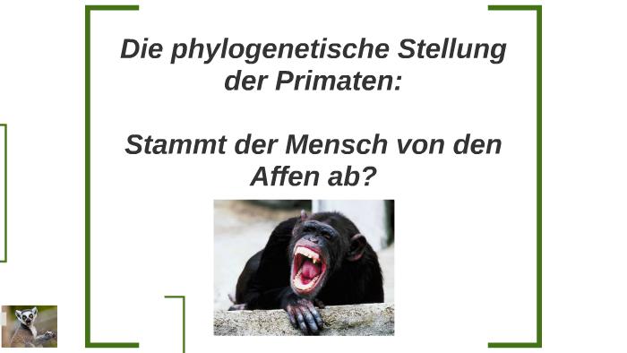 Die phylogenetische Stellung der Primaten: by Sara Cilli on