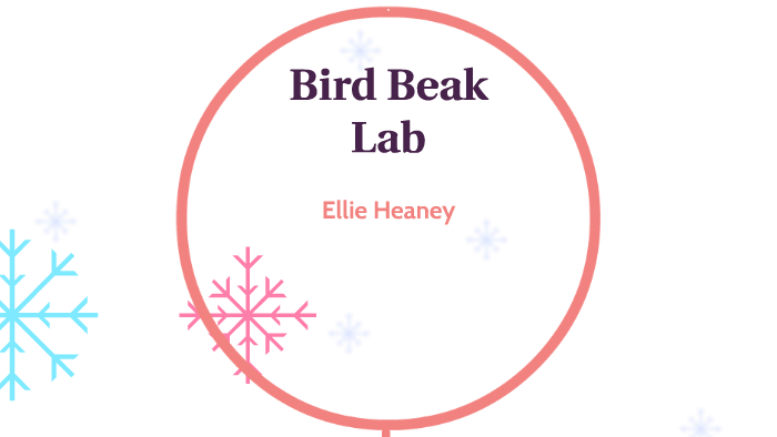 Bird Beak Lab by Ellie Heaney on Prezi