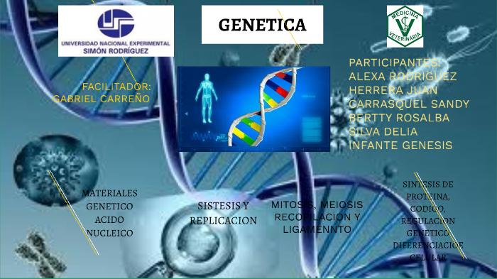 Genetica By Alexa Rodriguez On Prezi Next
