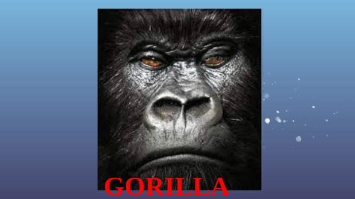 gd5wldkv5knsawnhek6zkdeqip6jc3sachvcdoaizecfr3dnitcq_3_0 cell organization of gorilla by ryan baloro on prezi