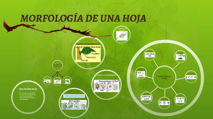 Morfología De Una Hoja By Alejandra Mendez On Prezi