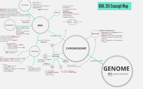BIOL 351 Concept Map by Mariel Dologmandin on Prezi Dna Concept Map on