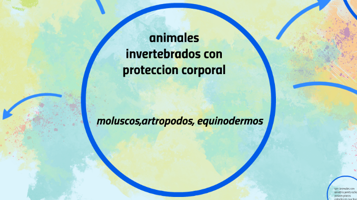 Animales Invertebrados Con Proteccion Corporal By Jessica