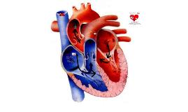 Customizable patient presentation medical template | Prezi
