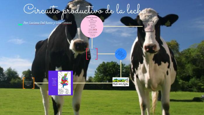 Circuito Productivo De La Leche : Circuito productivo del algodón y su historia lifeder