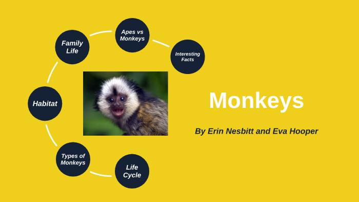 Erin and Eva's Monkey Inquiry by Melissa Burtenshaw on Prezi