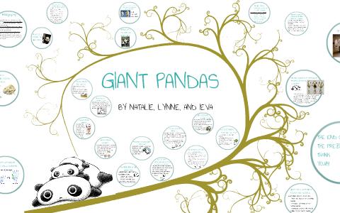 PANDA PRESENTATION by Lynne Chen on Prezi