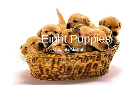 eight puppies poem