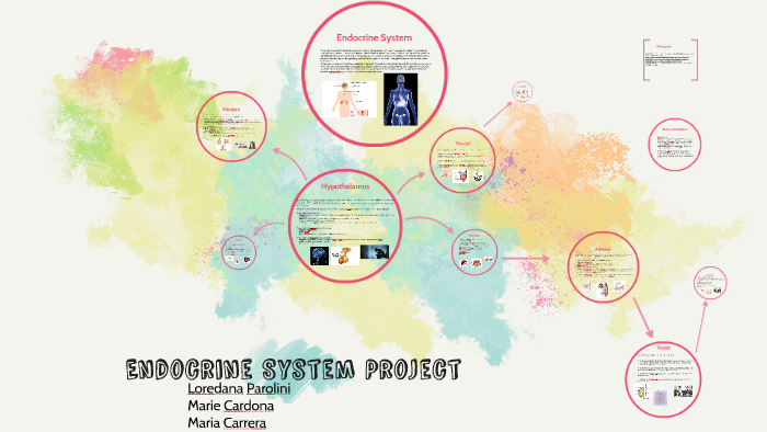 Endocrine System Project By Maria Elena Cardona On Prezi