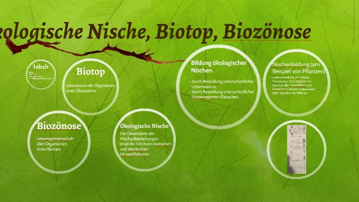 Biozonose Definiton Beispiel Und Okologie Mit Video 12