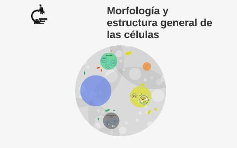 Morfologia Y Estructura General De Las Celular By Camila