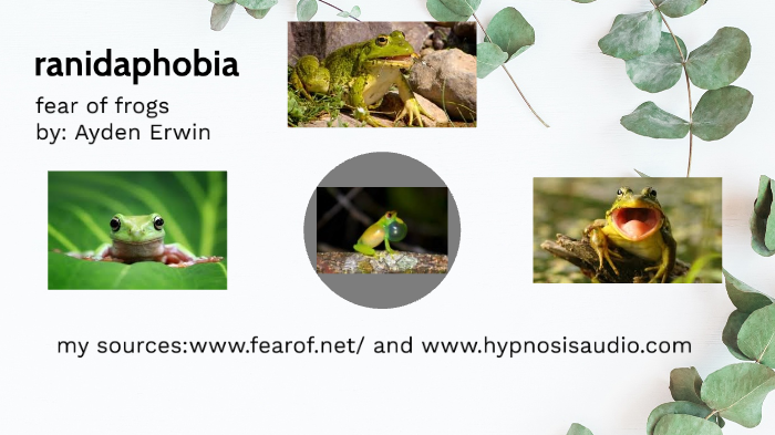 Fear Of Frogs Ranidaphobia By Ayden Erwin