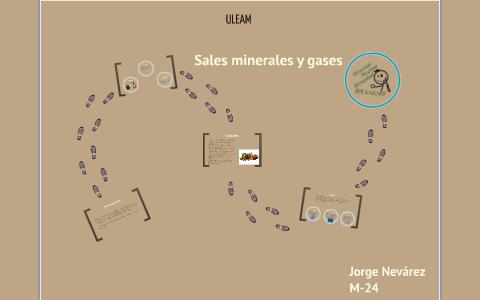 biomoleculas inorganicas agua sales minerales y gases