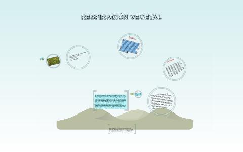 Respiración Vegetal By Pau Martinez On Prezi