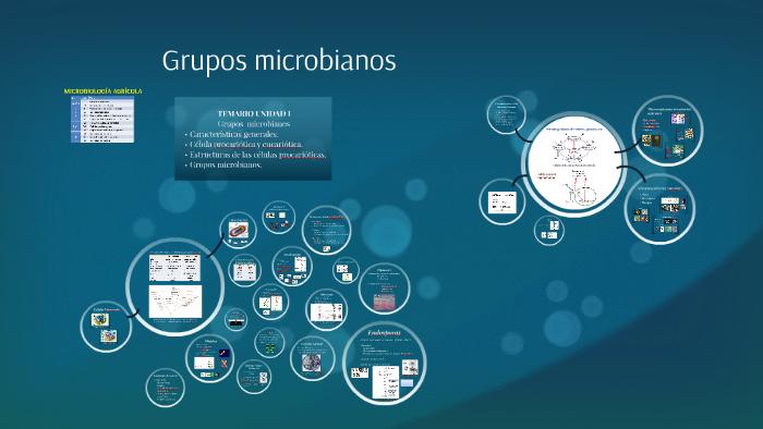 Unidad I Grupos Microbianos By Prezi User On Prezi