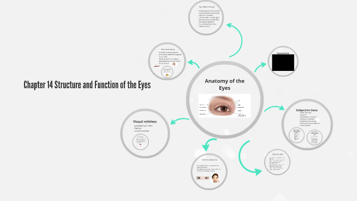 Chapter 14 Structure And Function Of The Eyes By Julie Clarida On Prezi