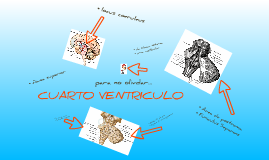 CUARTO VENTRICULO! by Emma Kleen on Prezi