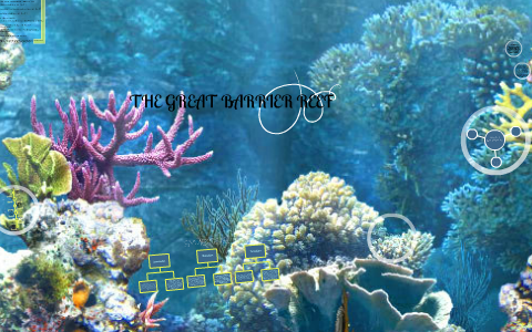 coral reef secondary consumers