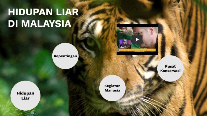 F3 T5 Hidupan Liar Di Malaysia By Mior Amir On Prezi Next