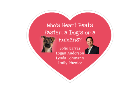 Whos Heart Beats Faster A Dogs Or Humans By Sofie Barras On Prezi