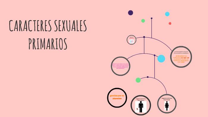 Caracteres sexuale primarios en el hombre