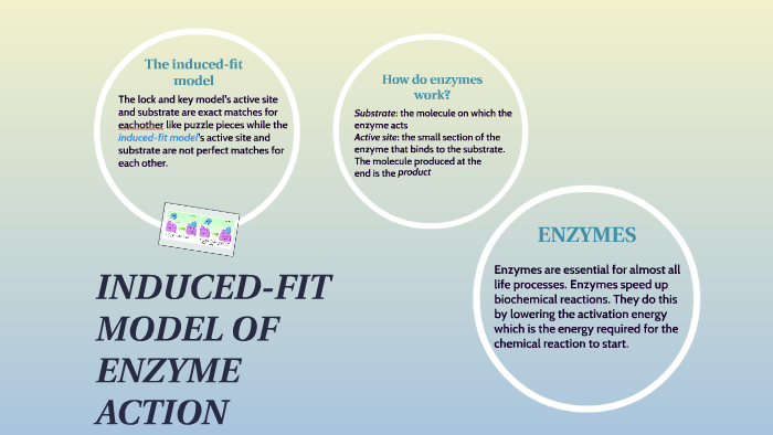 lock and key model activation energy